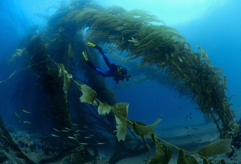 anacapa-kelp.jpg