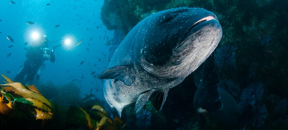 black-seabass.jpg