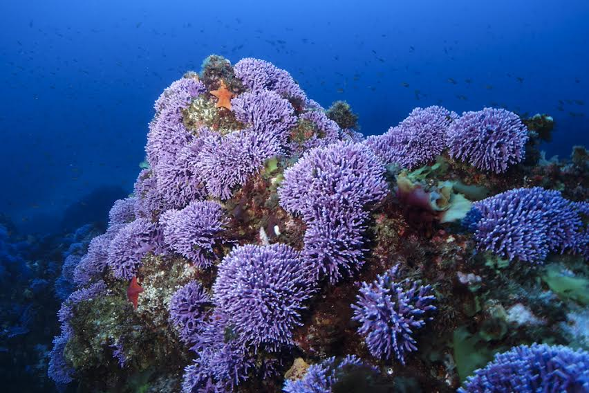 PADI Shop Scuba Catalina Center Divers online scuba