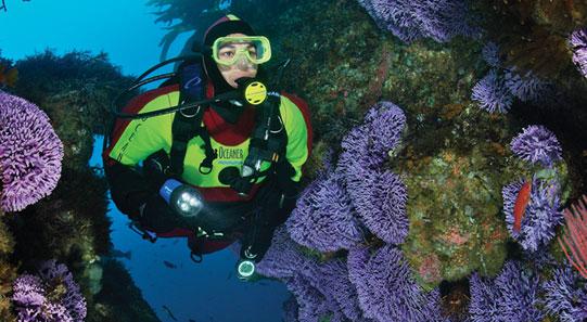 PADI dive PADI Scuba PADI Dive Center in California